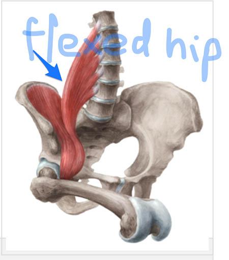 flexed-hip-kenhub-com