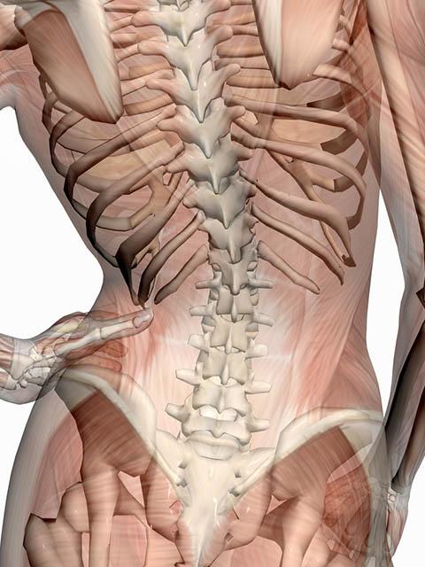 Image of lower back pelvis tilt